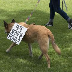 Dog wearing a sign: BITE THE POWER